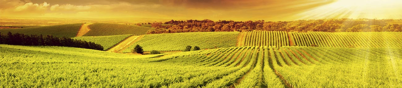 Fertilizer Additives Supplier